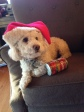 "Estate Planning As Explained In Pictures:  ""Caught in the act!"" Biggie the Bichon loves cans.  He pulls them from the trash and rolls them down the hallway to his bed.  However, ""kicking the can down the road"" is not one of Biggie's issues.  I leave THAT ""art"" to some of my estate planning clients!"